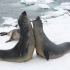 vida marinha no Oceano Antártico