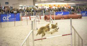 Salão dos Animais de Estimação em Fevereiro na FIL