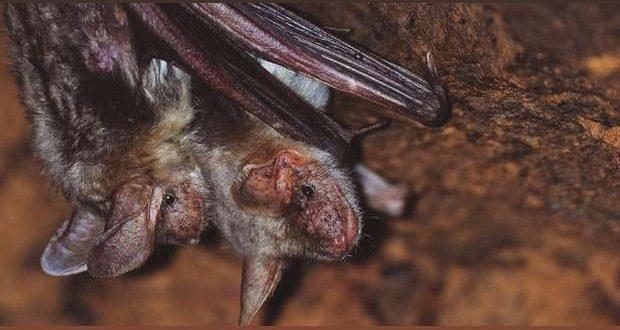 À descoberta dos Morcegos no Castelo de Palmela