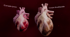 Gema Digital apresenta solução sobre o envelhecimento do coração