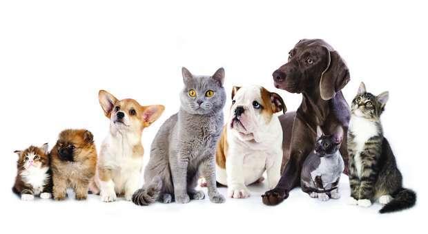 O PAN reclama verba para esterilização de animais domésticos
