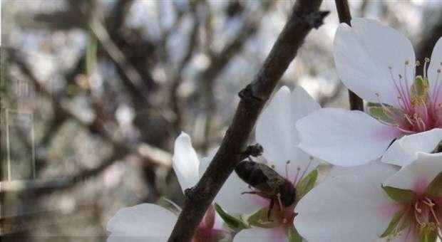 Viagem às Cerejeiras em Flôr na Rota da CP