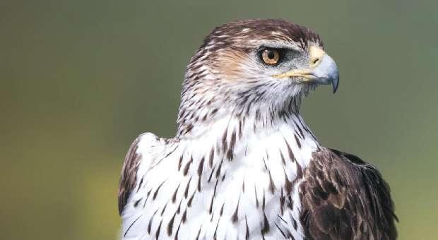 Festival de Observação de Aves na Vila de Sagres