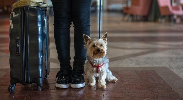 Férias com cão ou gato no Real Marina Residence