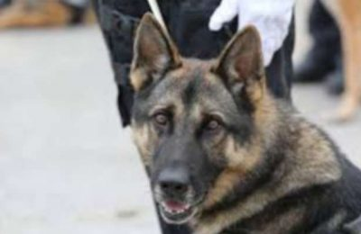 Destacamento da GNR em Kilkis na Grécia deteta clandestinos