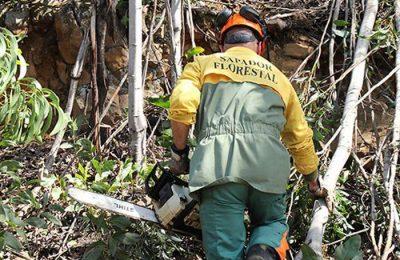 Lagos cede instalação para prevenção de Incêndios Florestais