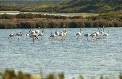 Associações do ambiente aplaudem decisão do governo