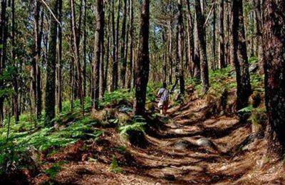 2ª Edição da ALUT - Algarviana Ultra Trail