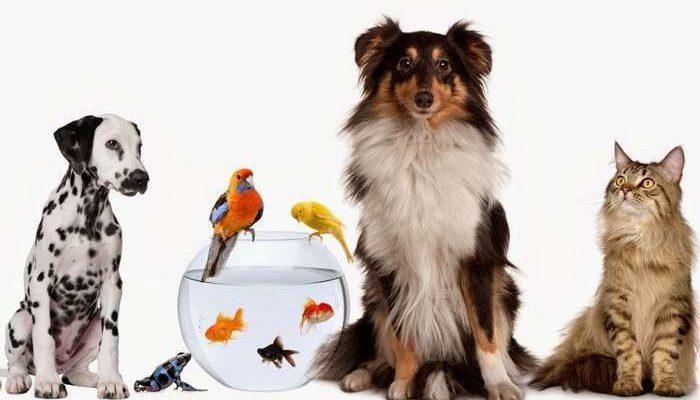 Apoios a Centros de Recolha Oficial de animais de companhia