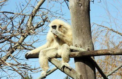 Municipio e Zoo de Lagos promovem a literacia ambiental