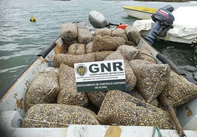 GNR apreende uma tonelada de berbigão na Ria Formosa