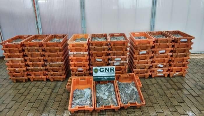 A GNR de Olhão apreendeu mais de uma tonelada de Polvo