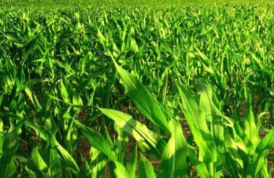 CDS recomenda a reativação do Observatório dos Mercados Agrícolas