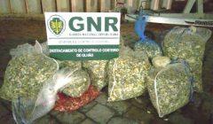 GNR de Olhão apreende 270 quilos de bivaldes