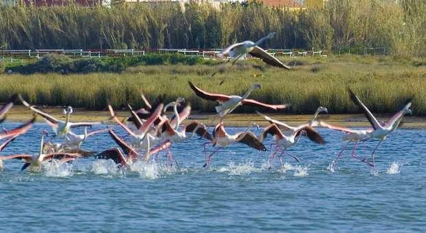 O Algarve é destino protagonista TOP GEAR France