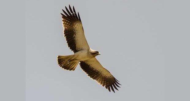 Medicamento ameaça Aves Selvagens em Portugal