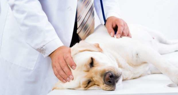 Chega a Portugal nova vacina contra a Leishmaniose Canina