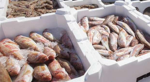 Mais Peixe e maior volume de negócios nas lotas portuguesas