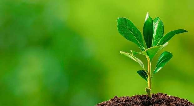 A SPMI apela a uma estratégia de combate à redução dos gases