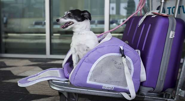 Países que reconhecem o animal de estimação em Viagem