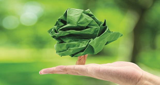 Transdev patrocina reflorestação de áreas ardidas