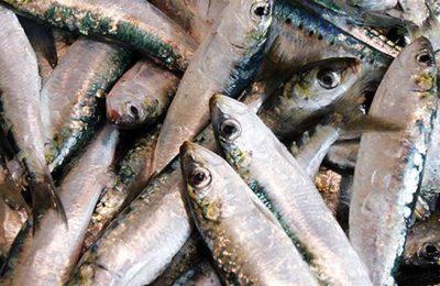 Lagos apoia reivindicações de pescadores e armadores da sardinha
