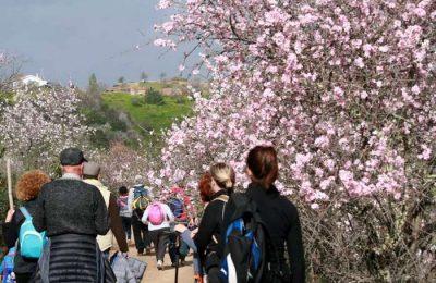 Passeios Amendoeiras em Flor na Cumeada Alto Mora