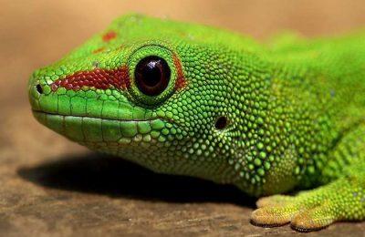 PAN denunciou venda de animais selvagens no Pet Festival