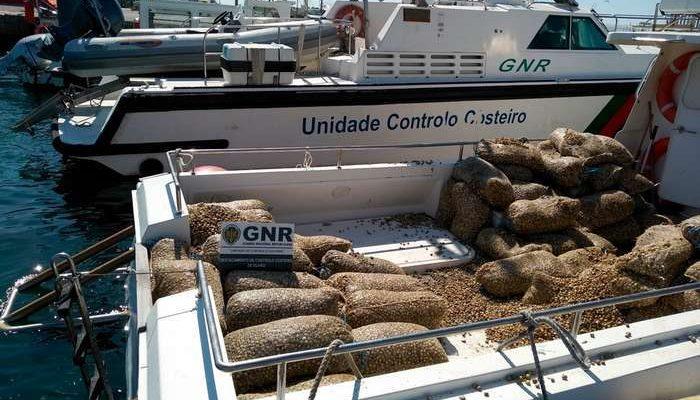 GNR de Olhão apreende 3 toneladas de berbigão juvenil