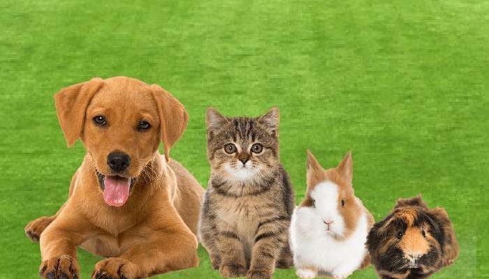 A guarda de animais de estimação para donos em férias
