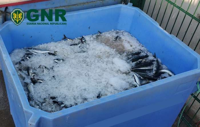 GNR de Olhão apreendeu 280 Kg de peixe por fuga à lota