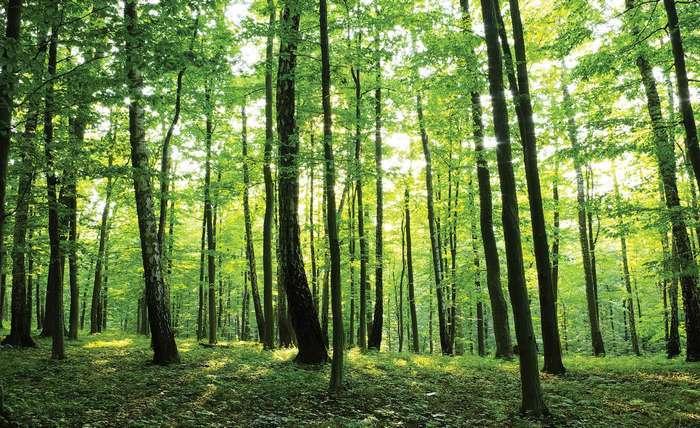 A Bayer anuncia medidas de sustentabilidade ambiental