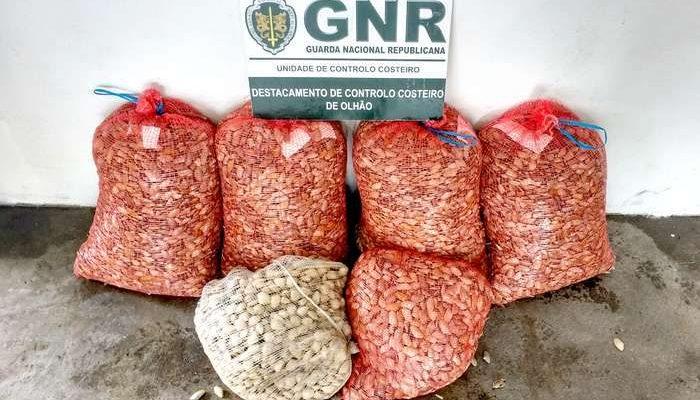 GNR de Olhão apreende de 152 Kg de bivalves