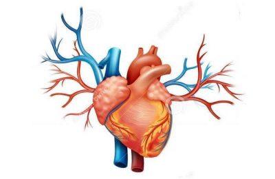Doenças cardiovasculares são causa de morte na Mulher