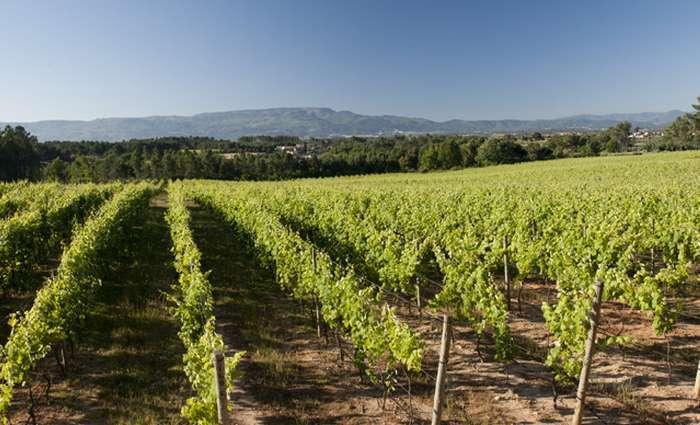 Concurso MUNDUS VINI distingue 23 vinhos do Dão
