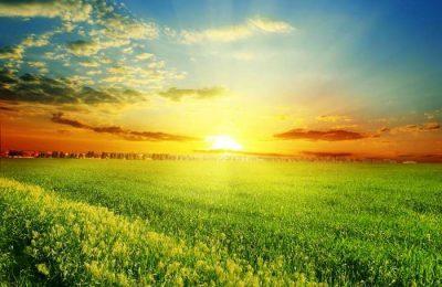 CBRE anuncia o novo departamento Agribusiness