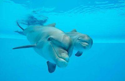 Jardim Zoológico apresenta o Bebé golfinho no Dia da Mãe