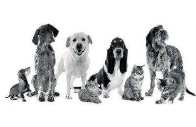 O CROA de Palmela apela à adoção de um animal
