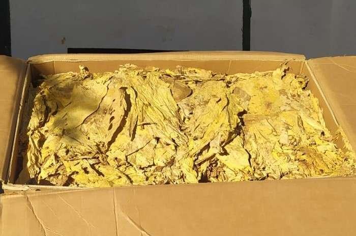 GNR apreende em Leiria 100Kgs de folha de tabaco
