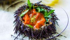 Investigadores desenvolvem projeto de Caviar Português