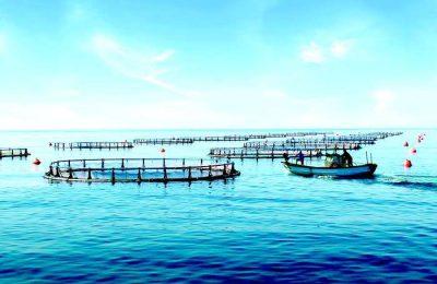 Sonae aposta em projeto nacional de aquacultura