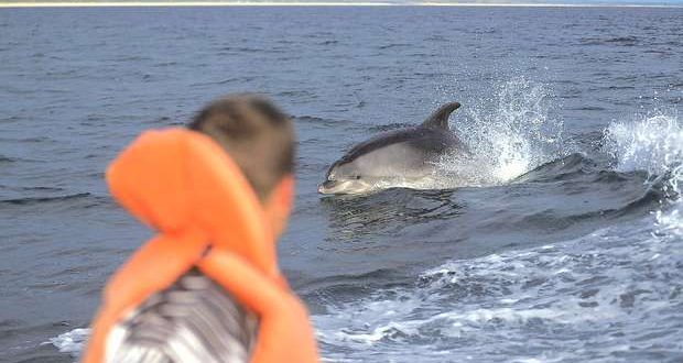 Campanha promove a proteção dos Golfinhos do Sado