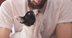 Carência de alojamento para animais de estimação