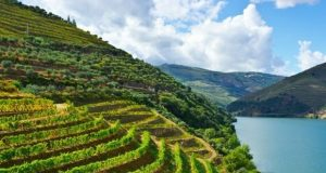 As marcas Douro e Porto estão protegidas no Reino Unido