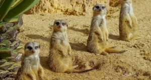 Jardim Zoológico anuncia férias de Natal online