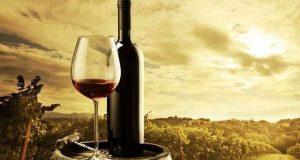 """Vinhos de Palmela em destaque no """"Viagens de Baco"""""""