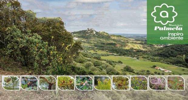 Palmela: À descoberta das plantas da Serra do Louro