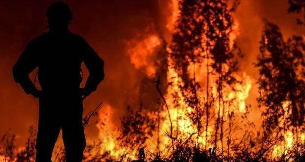 Até Março arderam 5.477 hectares nos 1200 incêndios
