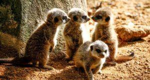 Jardim Zoológico em festa na semana da Criança