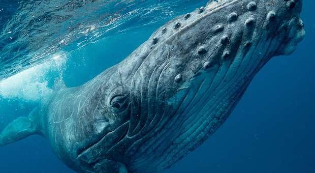 Lançamento oficial da Ocean Azores Foundation